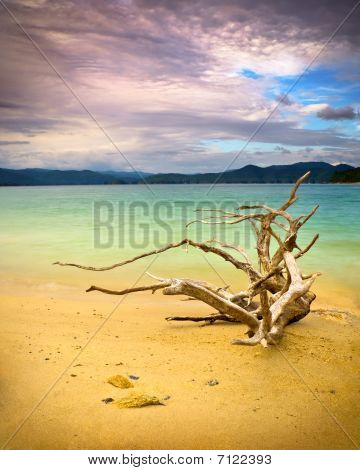 Tranquil Mountain Lake W/ Driftwood On Beach