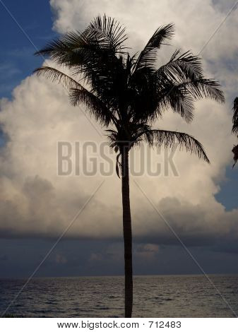 Palm Tree In Front Of Cloud
