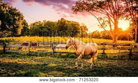 Beautiful palomino horse running across the pasture at sunset