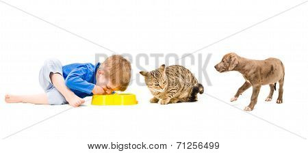 Joint food boy, cat and puppy