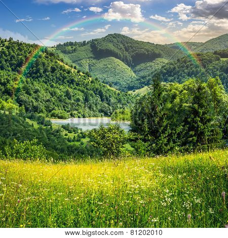 Pine Trees Near Meadow In Mountains with Rainbow