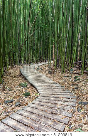 Hiking through the Bamboo forest on the way to Waimoku falls in Haleakala National Park, Maui, Hawaii poster