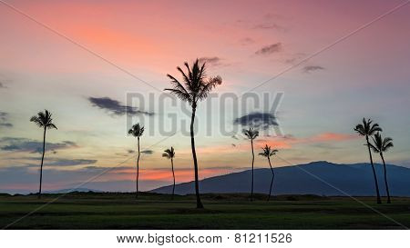 Palm trees at sunset on maui