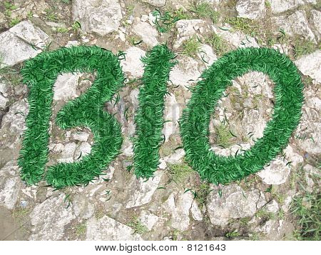 Text Bio Of The Grass