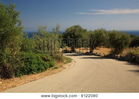 Path Through The Olive Groves