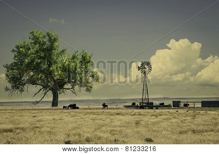 Cattle Near A Water Tank And Windmill