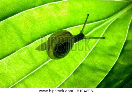small snail to fly green leaves, departing from its shell, the picture remained under a flash page backlighting poster