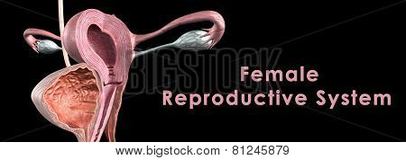 The female internal reproductive organs are the vagina, uterus, uterine tubes (Fallopian tubes, oviducts) and ovaries. poster