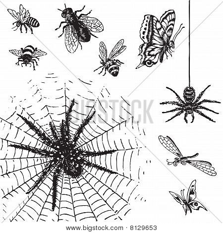 antique insects engravings (vector)