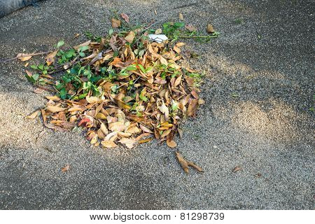 Dried Leaves Was Swept Together