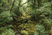 Brazil - jungle view in Mata Atlantica (Atlantic Rainforest ecosystem) in Serra dos Orgaos National Park (Rio de Janeiro state). poster