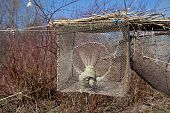 Bird trap in Vente Cape (Lithuania) one of the first bird ringing stations in Europe poster
