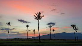 Palm trees at sunset on maui