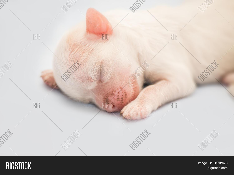 White Newborn Puppy Image Photo Free Trial Bigstock
