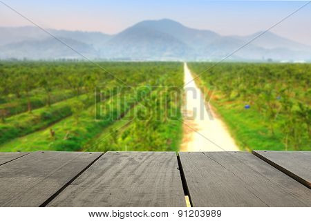 Defocus And Blur Image Of Terrace Wood And Orange Trees Plant