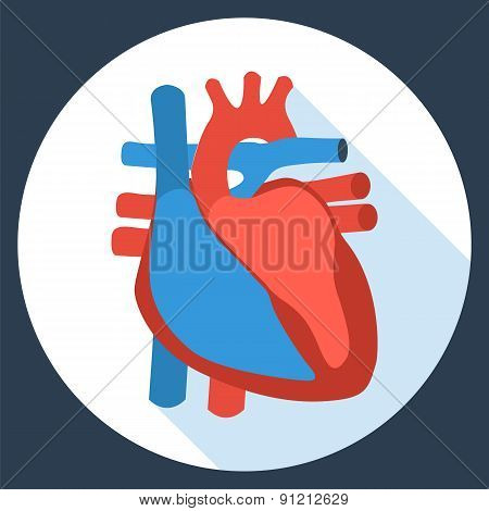 Flat design icon of anatomy of human heart.