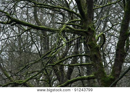Trees In Grinlow Woods