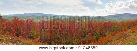 Wide panorama of the Appalachian Mountains with bright red autumn leaf colors