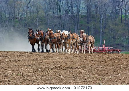 Horses Working On Amish Farm