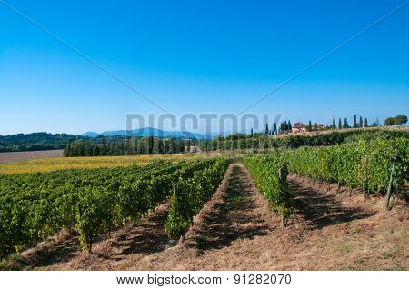 Vineyard In The Tuscan Countryside