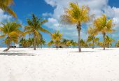 Panorama of Palm trees on the white sand. Playa Sirena. Cayo Largo. Cuba. poster