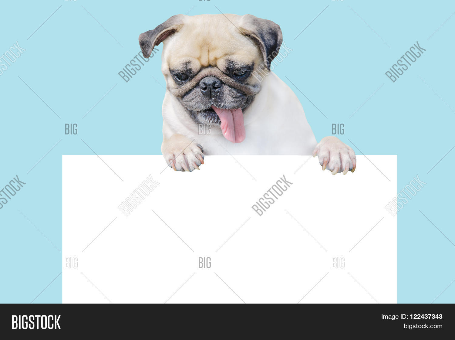 Cute Puppy Dog Pug Image Photo Free Trial Bigstock - Dog gift certificate template free