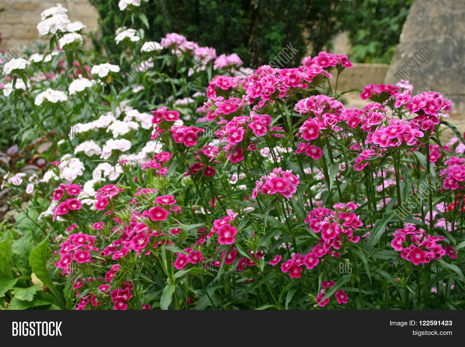Flower Bed Filled Deep Image Photo Free Trial Bigstock