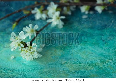 Spring Blossom Flowers on blue background. Selective focus