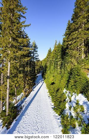 Road In The Coniferous Forest