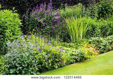 Beautiful green walled garden in the summer