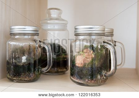 Terrarium In Glass Container