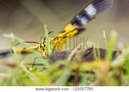 a beautiful yellow butterfly on nature background ** Note: Shallow depth of field