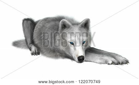 Digital render of a polar wolf resting isolated on white background
