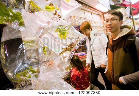HONG KONG, CHINA - FEB 10: Young man looking for a crabs and small aquarium fishes from set of plastic bags on zoo market on February 10, 2016. More than 47 mill. tourists visit Hong Kong annually
