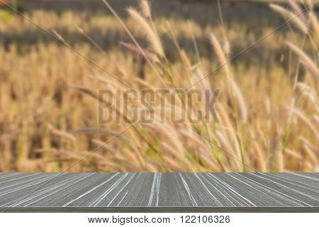 Poaceae Flower Meadow Field