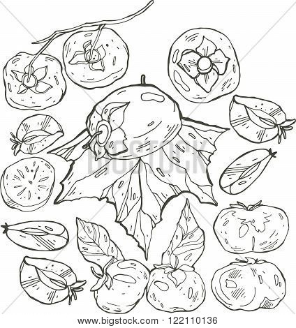 Persimmon Isolated Persimmon Vector. Composition of black and white Persimmons. Persimmon icon fruit set.