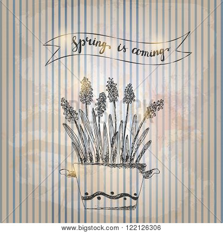 Hand drawn line art pot flower and spring is coming lettering. Spring grape hyacinth ink drawing on grunge striped background retro style.