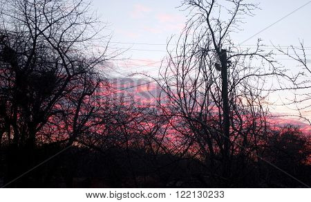 evening clouds of red color tree branches