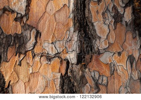 Dark larch bark background. Larch bark background. Larch bark texture. Tree bark background. Bark background. Bark texture. Tree bark texture