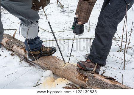 Sawing Logs Band Saw.