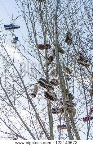 HATTINGEN, NRW, GERMANY - JANUARY 4, 2015: Shoes hanging in the air dangling from an old tree. The so-called