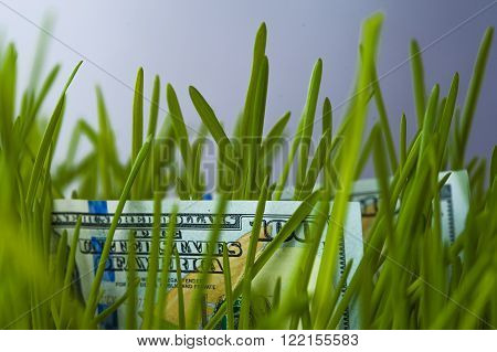 One hundred dollars bills in green grass. Growth of investment. Financial concept.