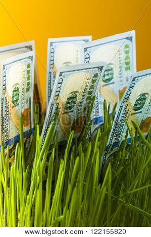One dollar bills in green grass. Currency growth. Financial concept.