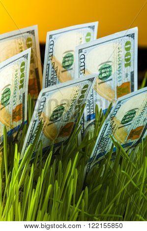 Money growth: dollar bills in green grass. Financial concept.