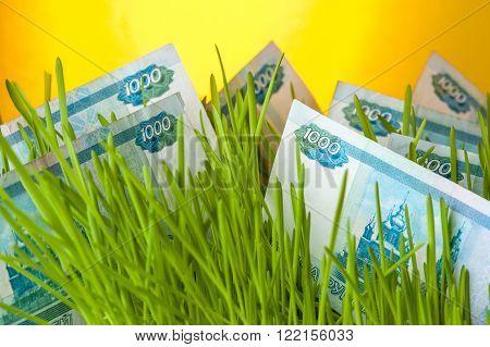Money grass: russian ruble bills in green grass. Appreciation of russian ruble. Financial concept.