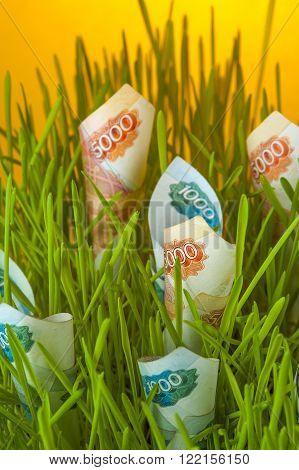 Ruble bills in green grass. Money growth. Financial concept.