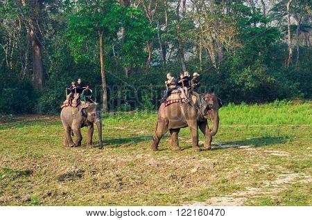 Elephant Safari In Chitwan , Nepal