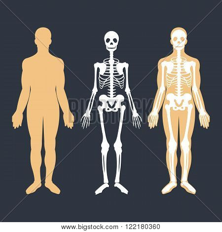 Human body and skeletal system flat illustrations set. Body silhouette, skeleton and bones inside body. Educational anatomy materials. Vector illustration