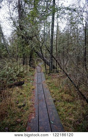 A boardwalk allows hikers through the Naas-Raunecker Nature Preserve to walk through the woods without getting their feet muddy.
