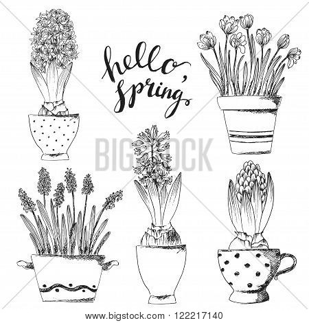 Set of vector hand drawn line art pot flowers and hello spring lettering. Spring hyacinth grape hyacinth crocus ink drawings for easter decor garden backgrounds floral design.